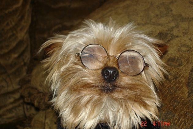 630x420_ehow_images_a05_a8_ad_nonsurgical-treatment-dog-cataracts-800x800[1].jpg